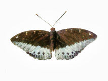 Schmetterlingsmalerei Stockfoto