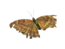 Schmetterlingsmalerei Lizenzfreie Stockfotos