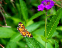 Schmetterlingsnahaufnahme auf einem Blatt lizenzfreies stockbild