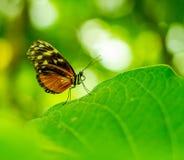 Schmetterlingsporträt mit dem bokeh verwischt Lizenzfreie Stockfotografie