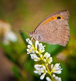 Schmetterlingssommernatur-Hintergrundmakro stockfoto