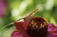 Schmetterlingssommernatur-Hintergrundmakro lizenzfreie stockbilder