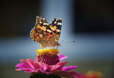 Schmetterlingssommernatur-Hintergrundmakro lizenzfreie stockfotos