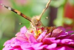 Schmetterlingssommernatur-Hintergrundmakro stockfotografie