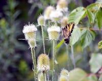 Schmetterlingsspaß Stockbilder