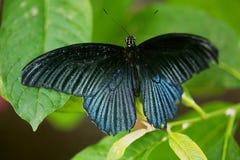 Schmetterlingswelt Lizenzfreies Stockbild