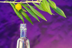 Schmieröl des Olivenbaums Stockfotos