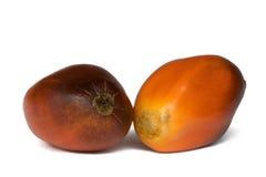 Schmieröl-Palmen-Früchte Stockfotografie