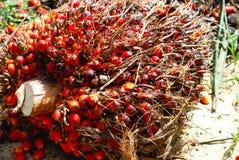 Schmieröl-Palmen-Startwert für Zufallsgenerator Lizenzfreies Stockbild