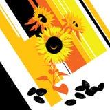 Schmieröl-Sonnenblume Stockbilder