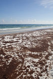 Schmieröl-Streuung auf dem Strand Juni 2010 Lizenzfreies Stockfoto