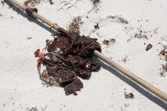 Schmieröl wäscht sich an Land auf Strand Stockfotos