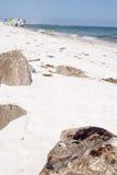 Schmieröl wäscht sich an Land auf Strand Stockfotografie