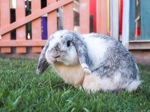 Schmierölniederdruck-Kaninchen Lizenzfreie Stockfotos