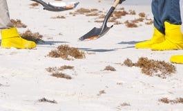 Schmierölstreuungarbeitskräfte, die Strand säubern