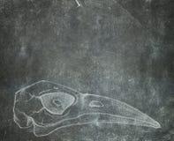 Schmutz maserte Hintergrund mit dem Hand gezeichneten Vogelschädel Lizenzfreies Stockfoto