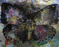 Schmutz-Schmetterlingshintergrundbeschaffenheit Lizenzfreie Stockfotografie