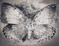 Schmutz-Schmetterlingshintergrundbeschaffenheit Stockbild