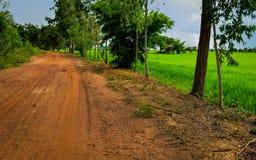 Schmutz-Straße in der Nähe das Reis-Getreidefeld Lizenzfreies Stockfoto