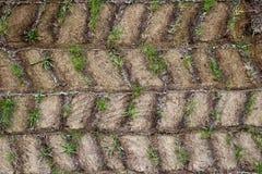 Schmutz- und Grasmuster Stockfoto