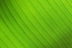 Schmutzbanane verlässt Hintergrund Stockfoto