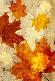 Schmutzhintergrund mit Herbstlaub Stockbild