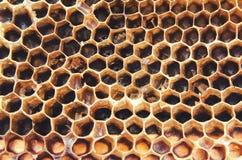 Schmutzige alte Bienenwaben Stockbild