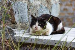 Schmutzige alte Schwarzweiss-Katze Stockfoto
