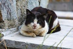 Schmutzige alte Schwarzweiss-Katze Stockbild