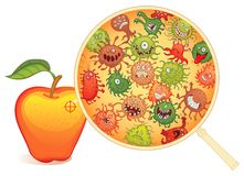 Schmutzige Frucht, unter dem Mikroskop Lizenzfreies Stockfoto
