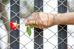 Schmutzige Hände werden oben mit Rosen gebunden oben gebunden mit Liebe Lizenzfreie Stockfotografie