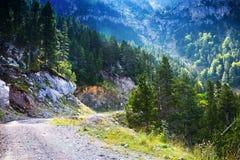 Schmutzige Straße durch Wald Lizenzfreie Stockfotografie
