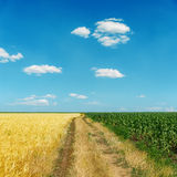 Schmutzige Straße zwischen Feldern unter blauem Himmel Lizenzfreies Stockbild
