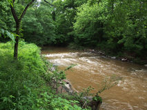 Schmutzige Stromflüsse schnell durch den Wald Stockbild