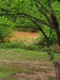 Schmutziger Fluss nachdem dem Regnen lizenzfreie stockbilder