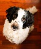 Schmutziger gerochener Hund Lizenzfreie Stockfotografie