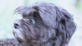 Schmutziger Hund