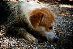 Schmutziger Hund stockbild