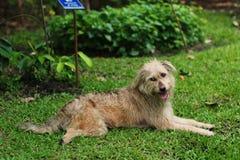 Schmutziger Hund lizenzfreie stockbilder