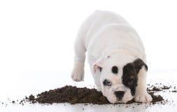 Schmutziger Hund im Schlamm stockbilder