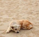 Schmutziger Hund liegen auf jemand unten, wartend Lizenzfreie Stockfotos
