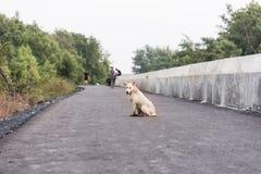 Schmutziger Hundeschoßhund, der auf Weisenweg sitzt lizenzfreies stockfoto