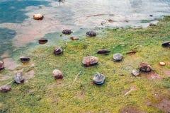 Schmutziger Strand mit Algen und Abfällen Lizenzfreie Stockbilder