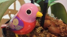 Schmutziger Vogel Lizenzfreies Stockfoto