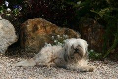 Schmutziger weißer Hund Lizenzfreie Stockfotos