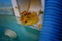 Schmutziges Abstreicheisen des Swimmingpools Stockfotografie