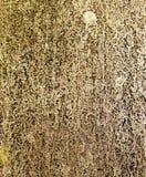 Schmutziges Gras unter der Dusche Stockfotos