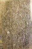 Schmutziges Gras unter der Dusche Lizenzfreie Stockfotografie