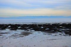 Schmutziges Marschlandwasser Lizenzfreies Stockfoto