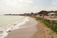 Schmutziges Meerwasser voll der Meerespflanze Stockfoto